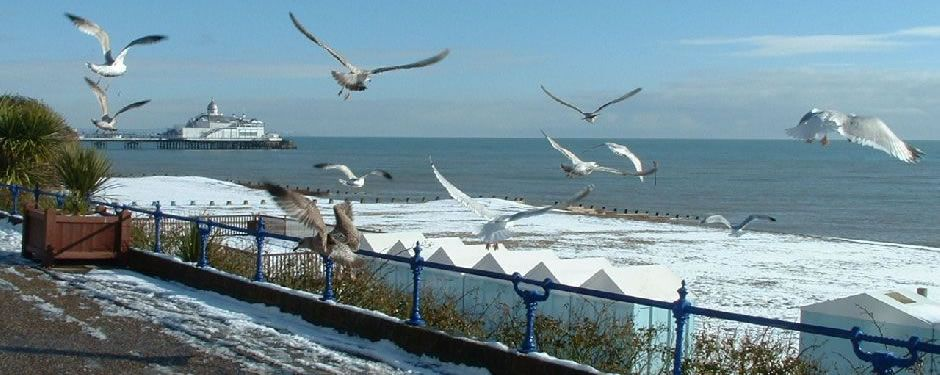Seagulls in the snow